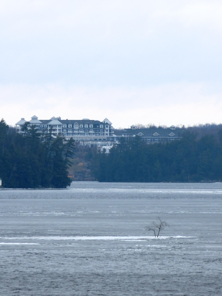 A tree grows on Rosseau