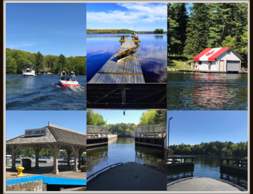 MarketWATCH Muskoka: 12 June 2019