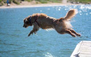 Dog Days of Summer (Jumping Dog)