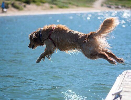 MarketWATCH Muskoka: Dog Days of Summer